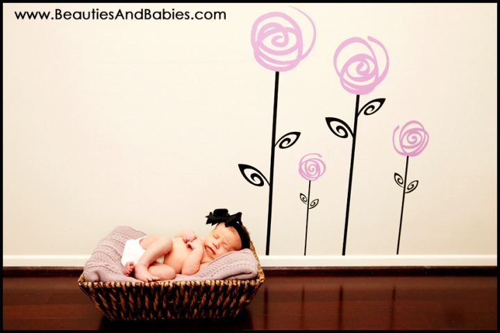 newborn baby in basket photograph