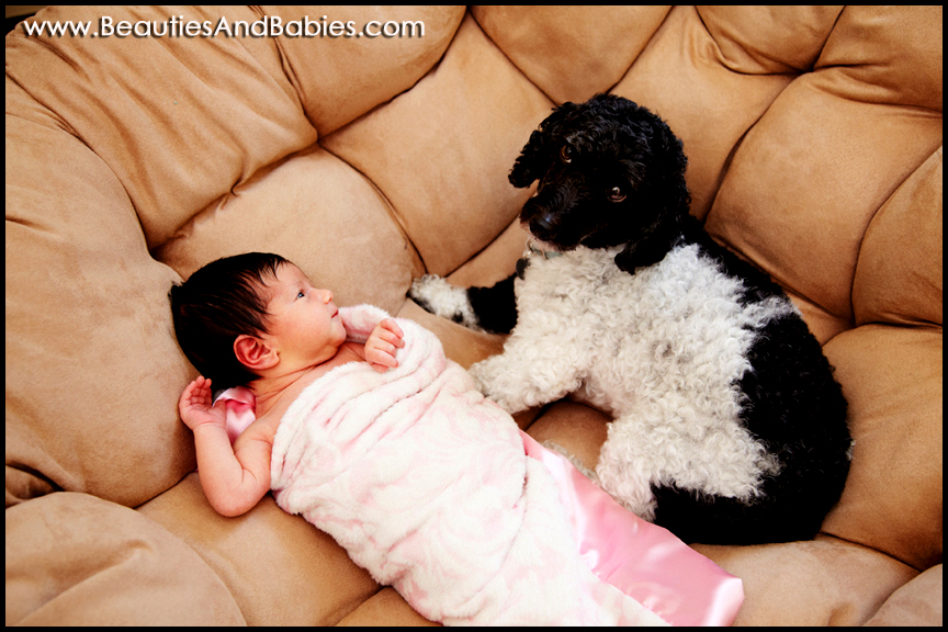 newborn baby girl with dog professional photography