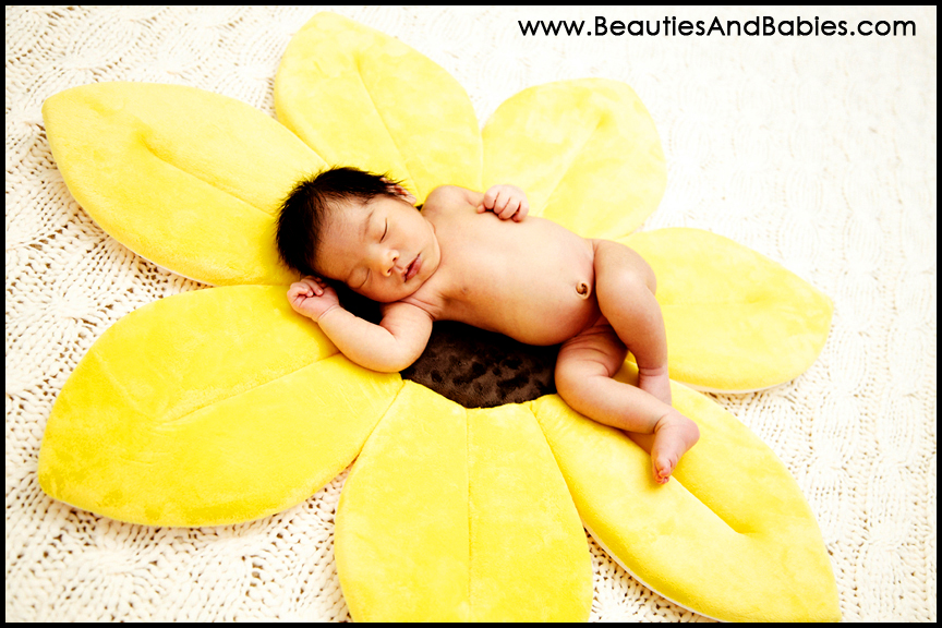 newborn baby sleeping on sunflower professional pictures Los Angeles photography