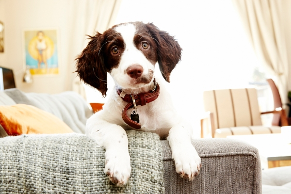 puppy photography_0201